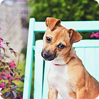 Adopt A Pet :: Darla - Peachtree City, GA