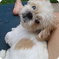 Adopt A Pet :: Nemo - Mississauga, ON