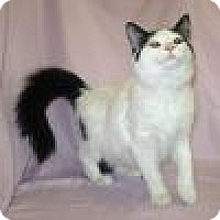Adopt A Pet :: China - Powell, OH