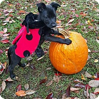 Adopt A Pet :: Julie meet me 10/31 - East Hartford, CT
