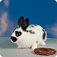 Adopt A Pet :: Milano - Marietta, GA