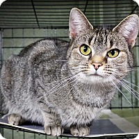 Adopt A Pet :: Shelly - Marlinton, WV