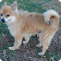 Adopt A Pet :: Miller - Aurora, IL