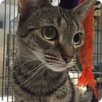 Adopt A Pet :: WILLOW - Cliffside Park, NJ