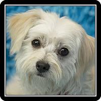 Adopt A Pet :: Sunshine - San Diego, CA