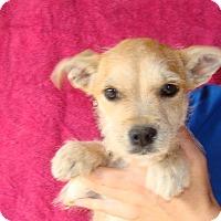 Adopt A Pet :: Marilyn - Oviedo, FL