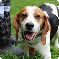 Adopt A Pet :: Fletcher - Doylestown, PA