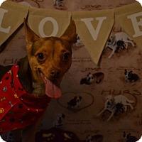 Adopt A Pet :: Dollie - Okeechobee, FL