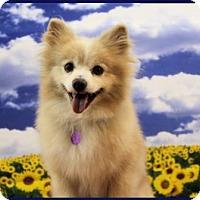 Adopt A Pet :: Watson - Dallas, TX