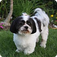 Adopt A Pet :: MARLENE - Newport Beach, CA