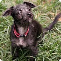 Adopt A Pet :: Charleston - Woonsocket, RI