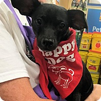 Adopt A Pet :: Coby - Forreston, TX