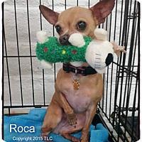 Adopt A Pet :: Roca - Simi Valley, CA