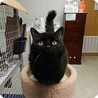 Adopt A Pet :: Lexie - Plainville, MA