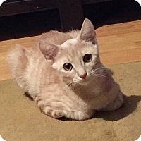 Adopt A Pet :: Oat - New  York City, NY