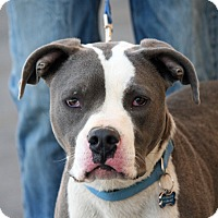 Adopt A Pet :: Hero - Palmdale, CA