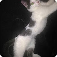 Adopt A Pet :: Brooke - Staten Island, NY