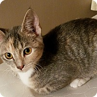 Adopt A Pet :: Harley - Cannon Falls, MN