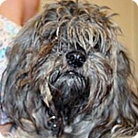 Adopt A Pet :: Peppa - Wildomar, CA