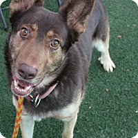 Adopt A Pet :: Jimmy - Woodland, CA
