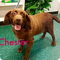 Adopt A Pet :: Chester - Cumming, GA