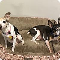 Adopt A Pet :: Flash - Gillsville, GA