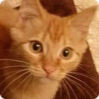 Adopt A Pet :: Garfield - Brighton, MO