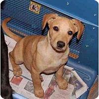 Adopt A Pet :: Georgie - Chula Vista, CA
