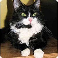 Adopt A Pet :: Marcy - Colmar, PA