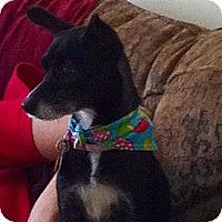 Adopt A Pet :: Kacey - Leeds, AL