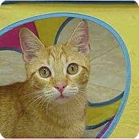 Adopt A Pet :: Sunny - Deerfield Beach, FL