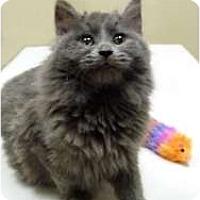 Adopt A Pet :: Gabby - Chicago, IL