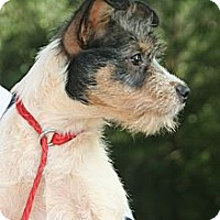 Adopt A Pet :: Cornflake - hartford, CT