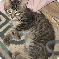 Adopt A Pet :: Saucy - Dallas, TX