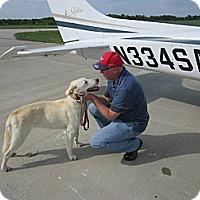 Adopt A Pet :: Rex - Oak Brook, IL