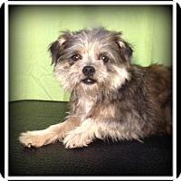 Adopt A Pet :: Restin - Indian Trail, NC