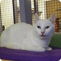 Adopt A Pet :: Tori - Dover, OH