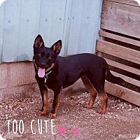 Adopt A Pet :: Quinn - Liberty, MO