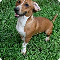 Adopt A Pet :: Dougie - Lufkin, TX