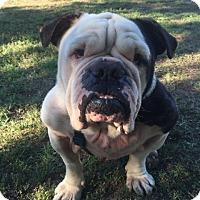 Adopt A Pet :: Mack - Santa Ana, CA