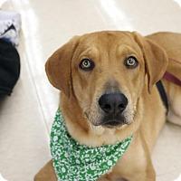 Adopt A Pet :: Holden - Homestead, FL