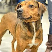 Adopt A Pet :: Enya - Salt Lake City, UT