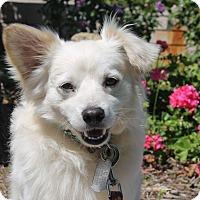 Adopt A Pet :: Neptune - Los Angeles, CA