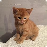 Adopt A Pet :: Cadbury - Incline Village, NV