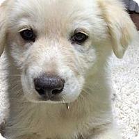 Adopt A Pet :: Tonka in OK / pup - adopted - Beacon, NY