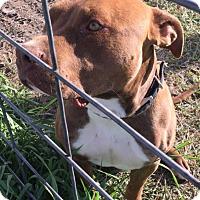Adopt A Pet :: Markus - Buffalo, WY