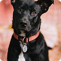 Adopt A Pet :: Jordan - Portland, OR