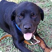 Adopt A Pet :: Gem - Fresno, CA