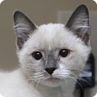 Adopt A Pet :: Quinn - Midvale, UT