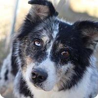 Adopt A Pet :: Marlow - Colorado Springs, CO